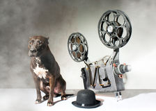 Dog and cinema Royalty Free Stock Image