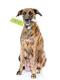 Dog with cleaning brush isolated on white background Royalty Free Stock Photography