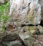 Dog Cliff Stock Photos