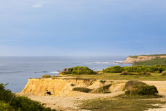 Dog on the Cliffs at Montauk Point. Camp Hero, Montuak Point, Long Island, New York Royalty Free Stock Image