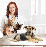 Dog in the clinic Royalty Free Stock Photography