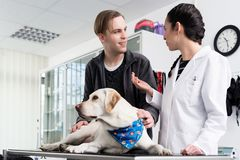 Dog in clinic for check-up royalty free stock images