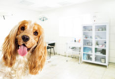 A dog in a clinic Stock Photo