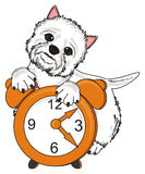Dog with clock Stock Photography