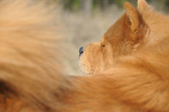 Dog close up Royalty Free Stock Images