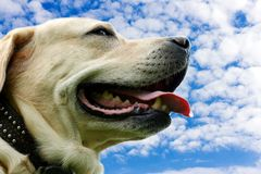 Dog close up. On a background of the sky Stock Photos