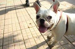 Dog~Close-up d'animal familier Photos libres de droits