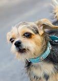 Dog closeup Royalty Free Stock Photography