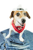 Dog clothes Stock Images
