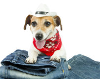 Dog clothes Stock Photography