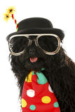 Dog clown Stock Image