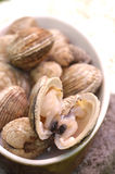 Dog cockle shellfish Royalty Free Stock Images