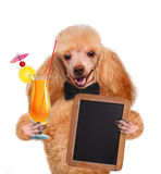 Dog with a cocktail Stock Image
