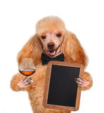 Dog with a cocktail Stock Images