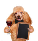 Dog with a cocktail Stock Photos