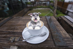 A dog in coffee cup.  Stock Photo