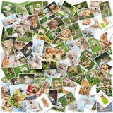 Dog collage - 101 pieces Stock Image