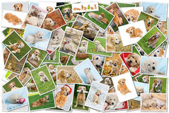 Dog collage Stock Images