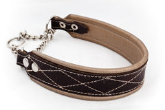Dog collar Royalty Free Stock Images