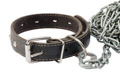 Dog collar Stock Photos