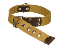 Dog collar Stock Image