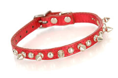 Dog collar Royalty Free Stock Photo