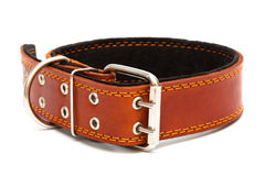 Dog collar. Leather dog collar on a white background Stock Photography