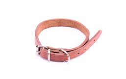 Dog collar Stock Images