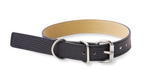 Dog collar. With clipping path Royalty Free Stock Image