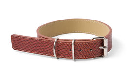 Dog collar. Isolated on white with clipping path Royalty Free Stock Photography