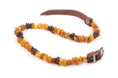 Dog collar of amber on the white royalty free stock photo