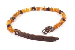Dog collar of amber on the white stock image
