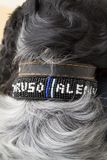 Dog collar and black and white fur Royalty Free Stock Photos