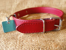 Dog collar with identification tag Stock Photography