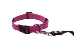 Dog collar and leash. Royalty Free Stock Photo