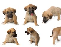 Dog collection Royalty Free Stock Image