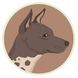 Dog collection American Hairless Terrier Geometric style Avatar Royalty Free Stock Photo