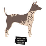 Dog collection American Hairless Terrier Geometric style Isolate Stock Photography