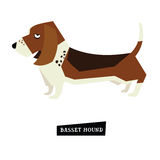 Dog collection Basset Hound Royalty Free Stock Images