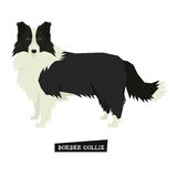 Dog collection Border Collie Geometric style Isolated object Royalty Free Stock Photo