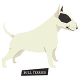 Dog collection Bull Terrier Black and White color Royalty Free Stock Photos