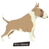 Dog collection Bull Terrier Fawn and White color Royalty Free Stock Photos