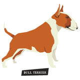 Dog collection Bull Terrier Red and White color Stock Photography