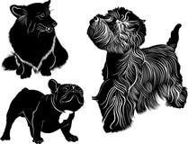 Dog collection. Cardigan Welsh Corgi. Welsh Corgi Stock Photo