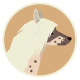 Dog collection Chinese Crested Geometric style icon round. Dog collection Chinese Crested Modern Geometric style icon round Royalty Free Stock Photos