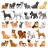 Dog collection vector illustration