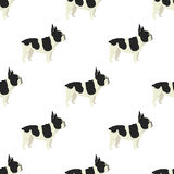 Dog collection French Bulldog Seamless pattern Stock Photo