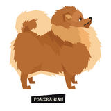 Dog collection Pomeranian Geometric style Stock Image