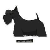 Dog collection Scottish Terrier Geometric style. Set royalty free illustration
