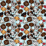 Dog collection Stock Images